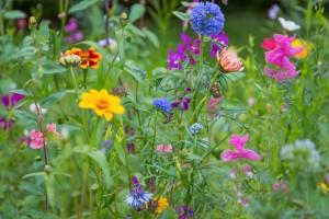 So können blühende Bienenweiden schon bald in Eichenzell aussehen
